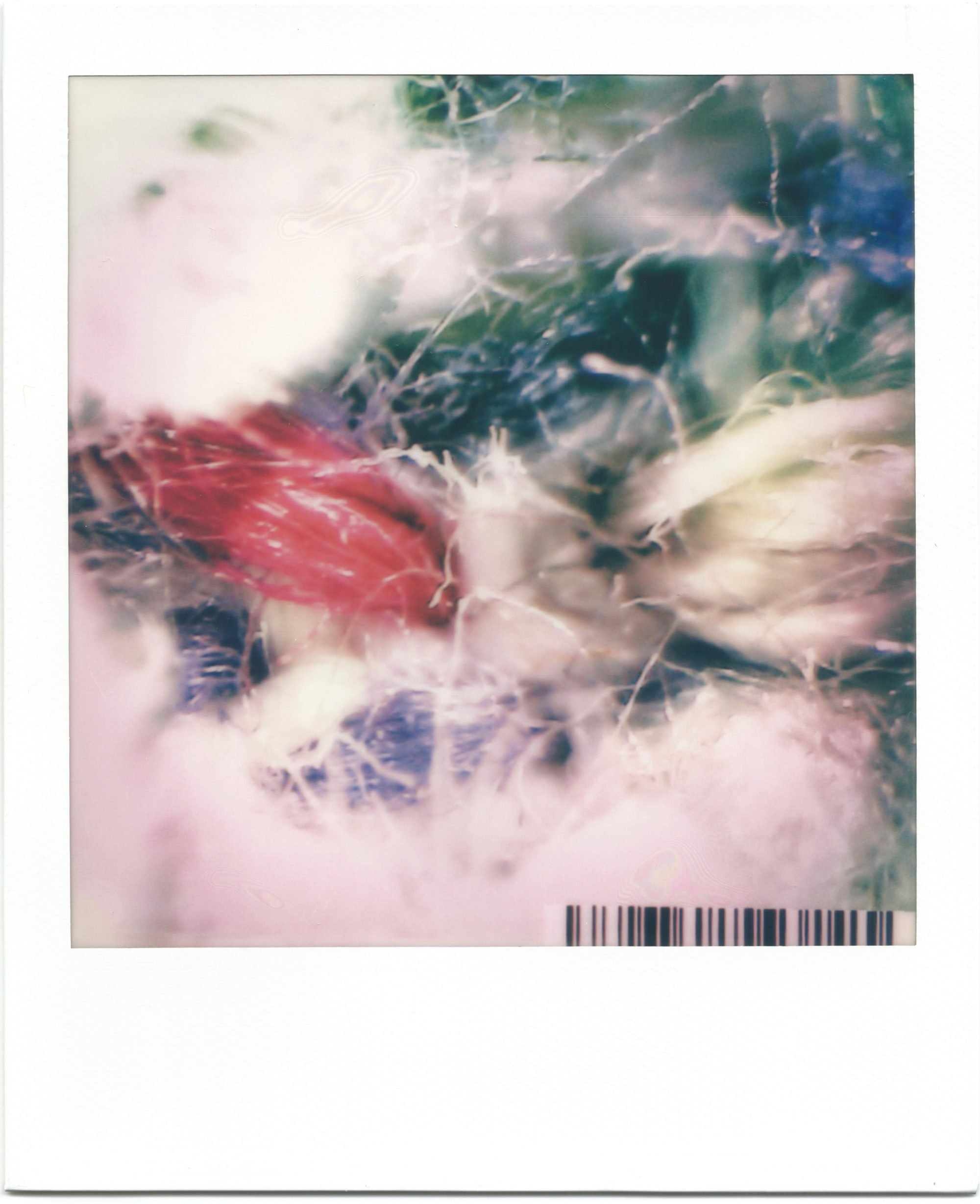 In a white polaroid print frame, is an image of highly magnified textile fibres. White fibres cover the bottom of the image and top left corner. In the top right corner dark green and blue fibres blend into the background. A cluster of red fibres peek through to the left. A small barcode sits in the bottom right corner.