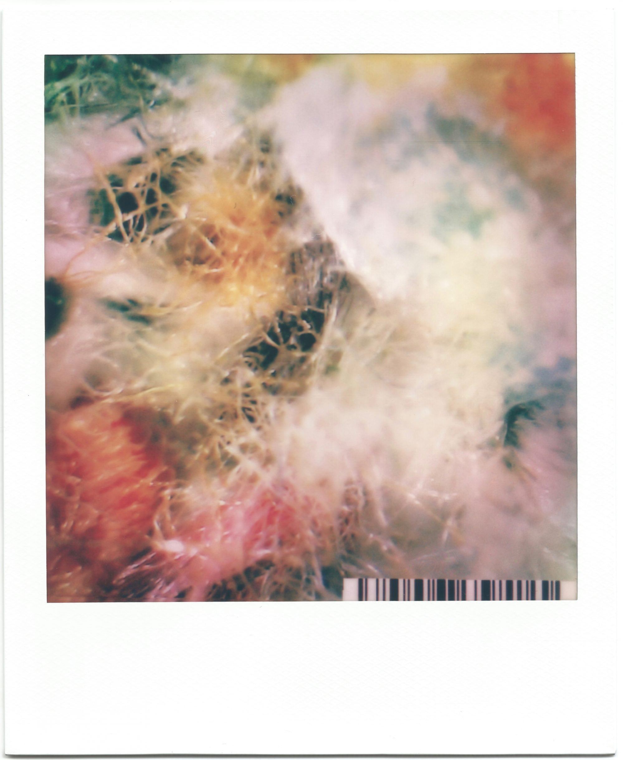In a white polaroid print frame, is an image of highly magnified textile fibres. White, pink and yellow fibres fill the frame with no distinct thread. Green fibres slightly peek through from behind. A small barcode sits in the bottom right corner.