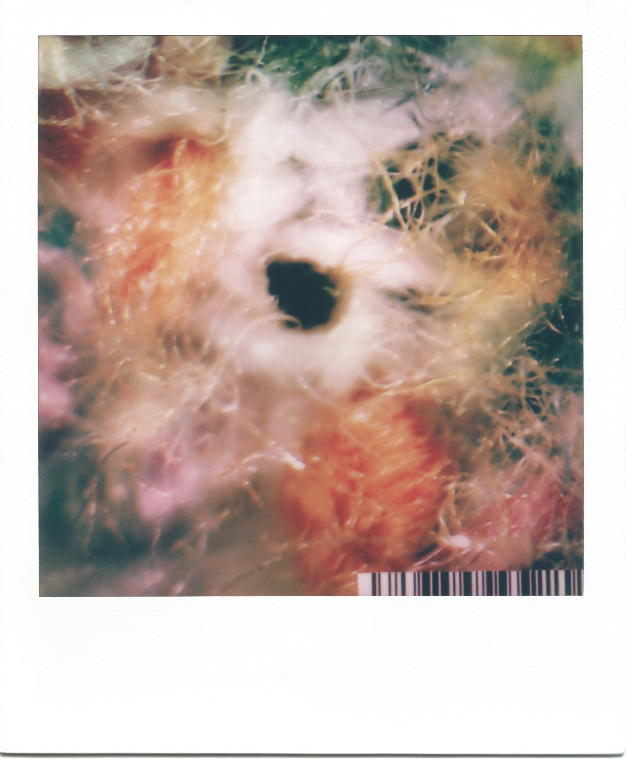 In a white polaroid print frame, is an image of highly magnified textile fibres. A small black hole sits at the centre of the image. It's surrounded by a swirl of white, yellow and orange fibres that expand out of the frame. Green fibres slightly peek through from behind. A small barcode sits in the bottom right corner.