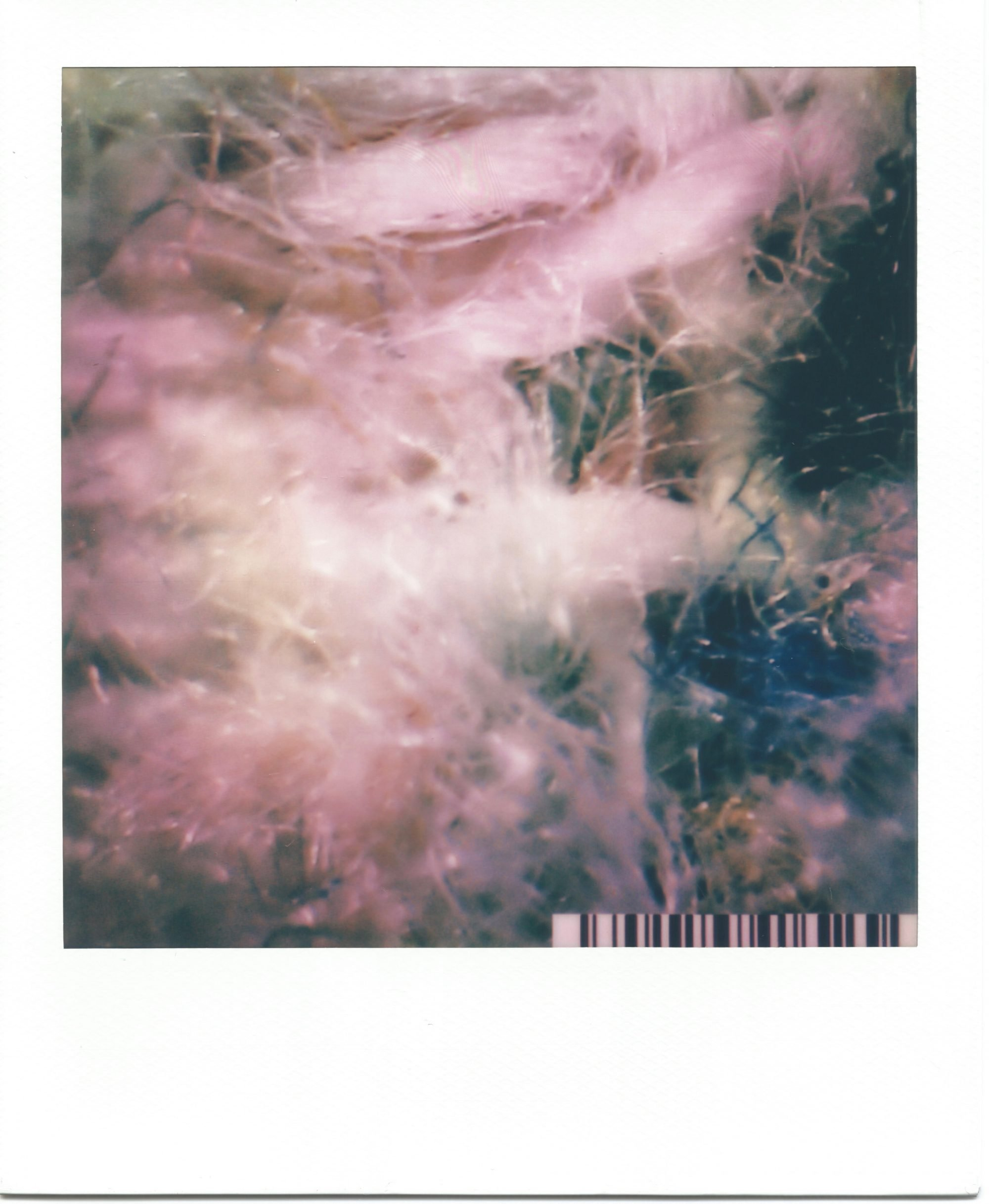 In a white polaroid print frame, is an image of highly magnified textile fibres. Lilac fibres fill the image, with a tight weave near the top of the frame. Along the right hand side, deep blue and black fibres mix with the lilac weave. A small barcode sits in the bottom right corner.